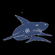 MGD Logo Shark